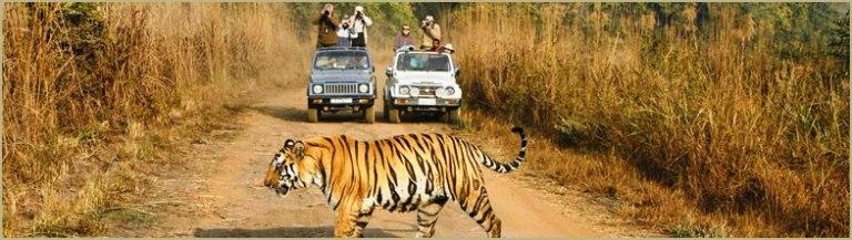 banner_wildlife